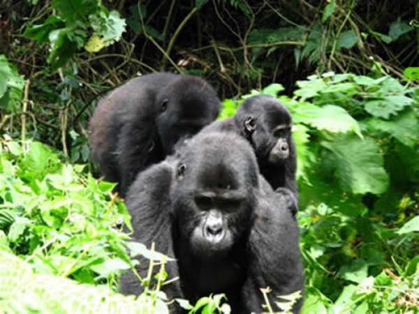Uganda Short Excursion Tours/Kampala City Tours